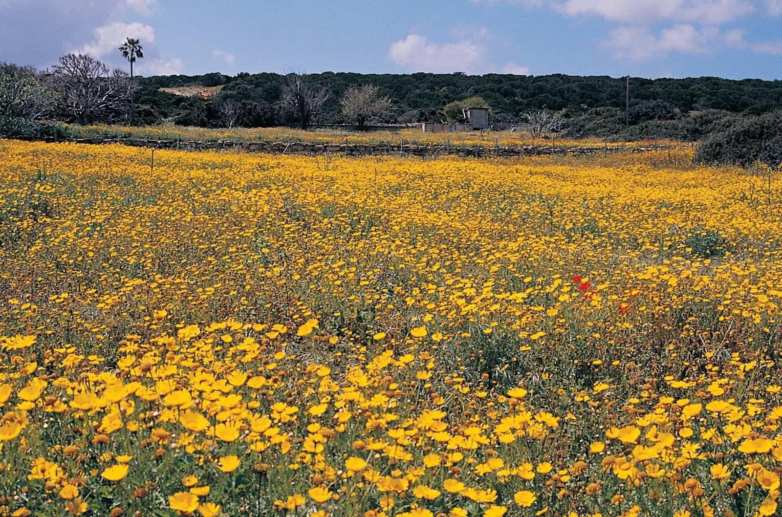 kıbrısta-bahar-gezisi